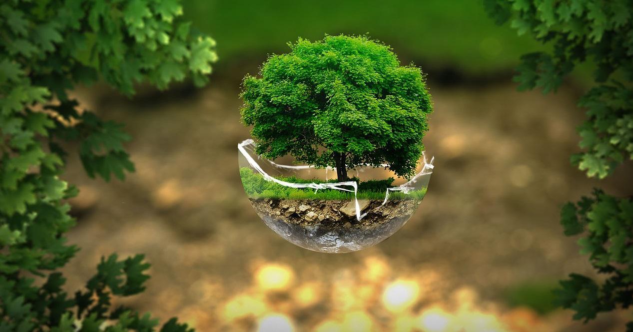 ეკოლოგიურად სუფთა პროდუქცია